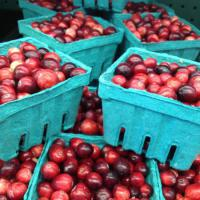 Cranberries from Colrain