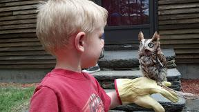 Toddler with Birds of Prey Owl